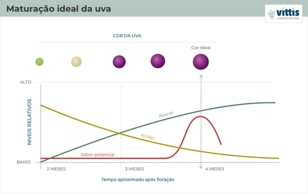 Gráfico da maturação ideal da uva